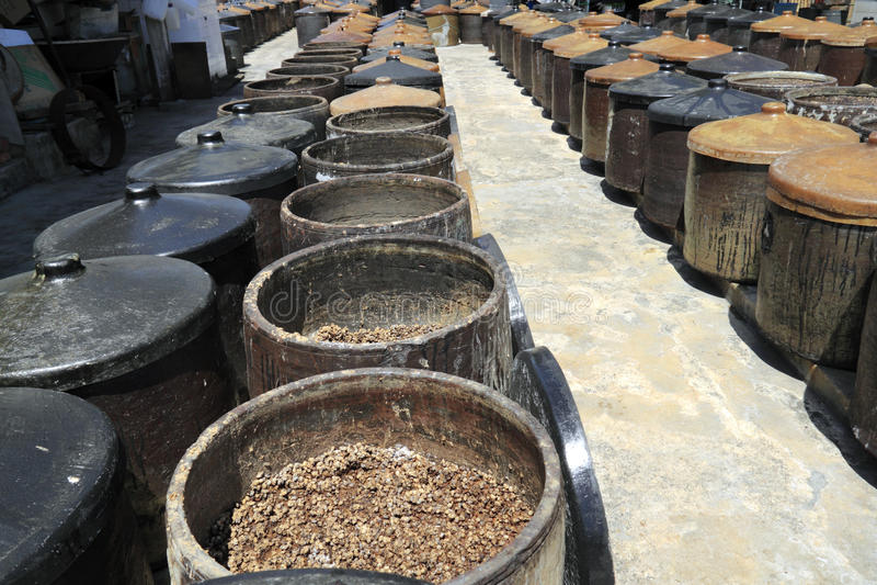 发酵大豆的豆 库存图片