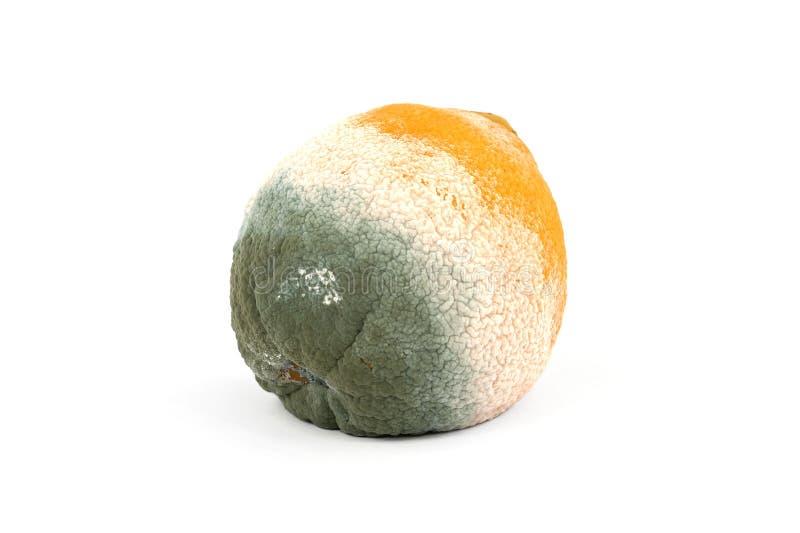 发霉橙色腐烂 库存图片
