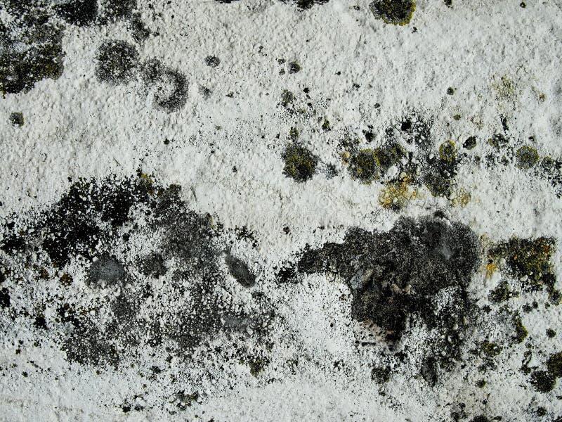 发霉的墙壁 免版税库存照片