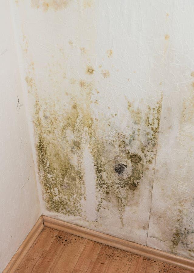 发霉的墙壁 免版税库存图片