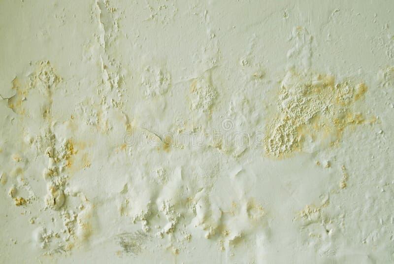 发霉的墙壁 库存照片