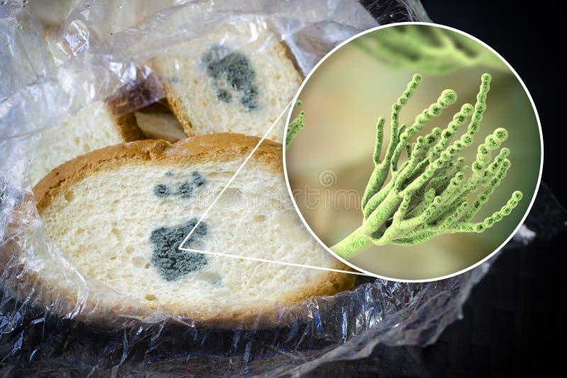 发霉的面包和特写镜头观点的毛丛真菌,牛奶调味汁引起代理  免版税图库摄影