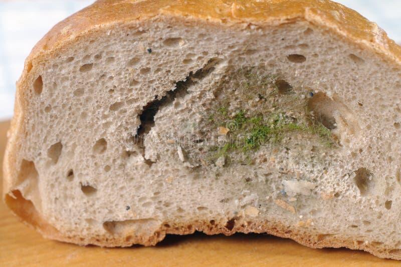 发霉的面包 免版税库存照片