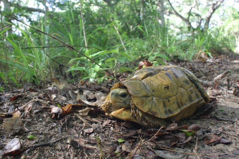 取决于的turtoise 库存照片