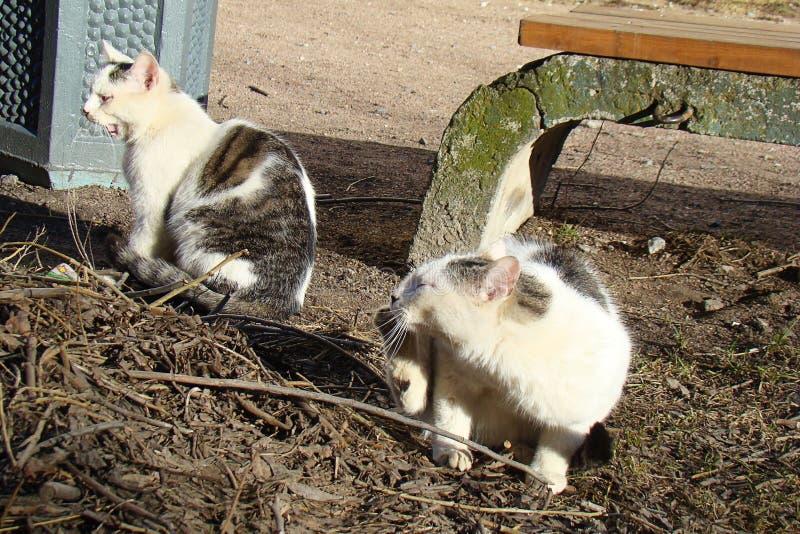 取暖两只无家可归的猫在阳光下 免版税库存图片