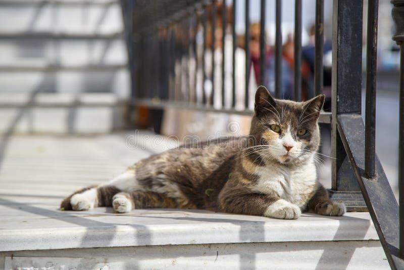 取暖在阳光下在其中一条的街道猫伊斯坦布尔街道  免版税库存图片