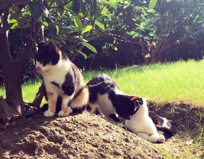 取暖离群的猫在阳光下 图库摄影