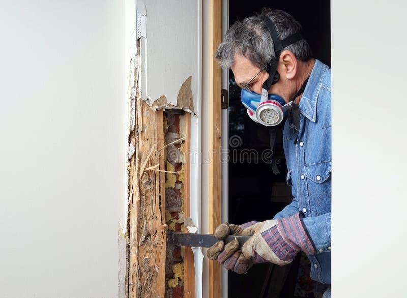 取消白蚁损坏的木头的人从墙壁 库存图片