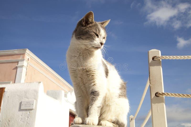 变冷在夏天的逗人喜爱的猫 免版税库存图片