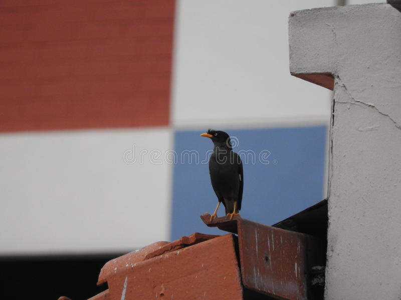 变冷在屋顶的鸟 库存图片