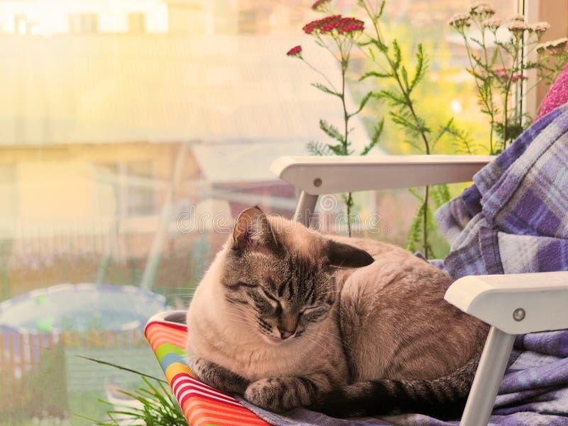 变冷在椅子的阳台的米黄猫 免版税图库摄影