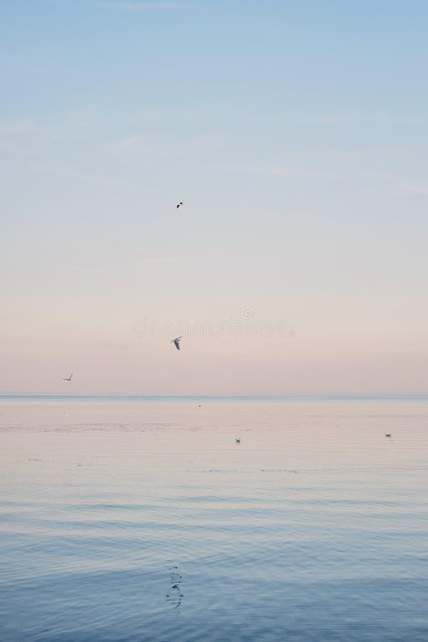 变冷白色的海鸥和飞行蓝色海水表面和波浪上  免版税库存照片