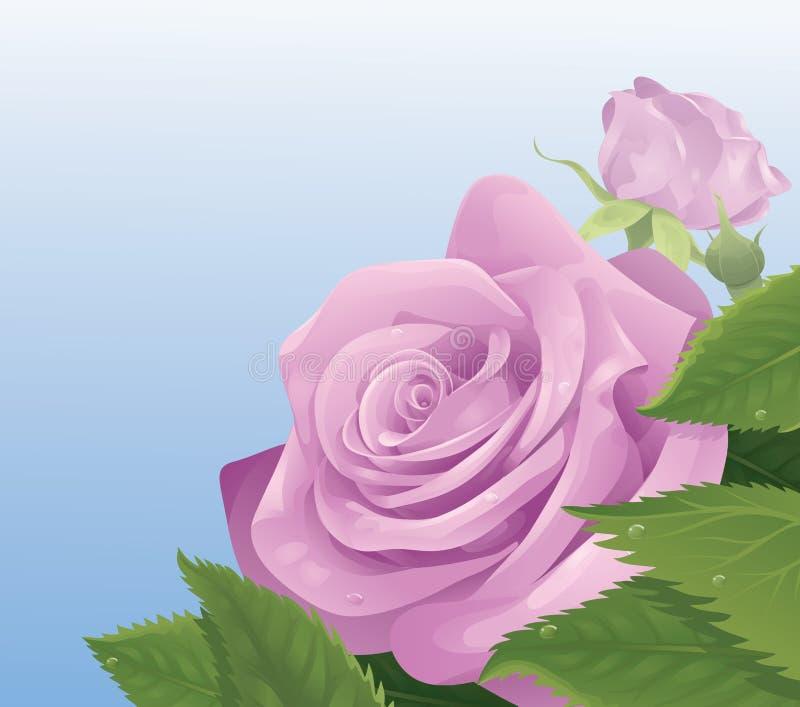 变粉红色玫瑰 库存例证