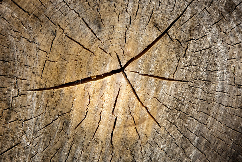 变老的木头 免版税库存照片