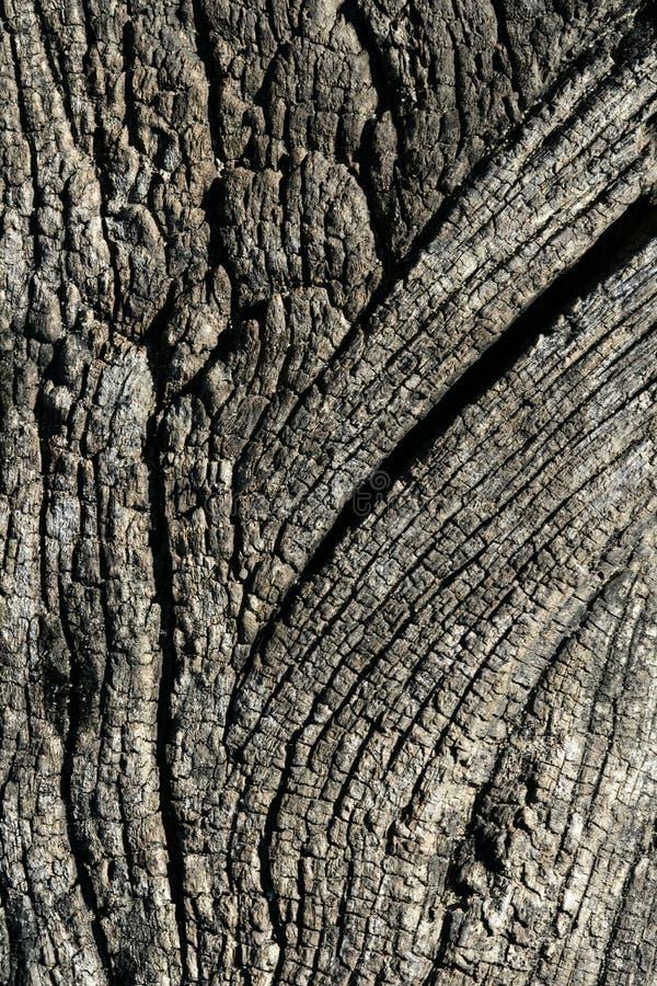变老的背景灰色宏观纹理木头 免版税库存照片