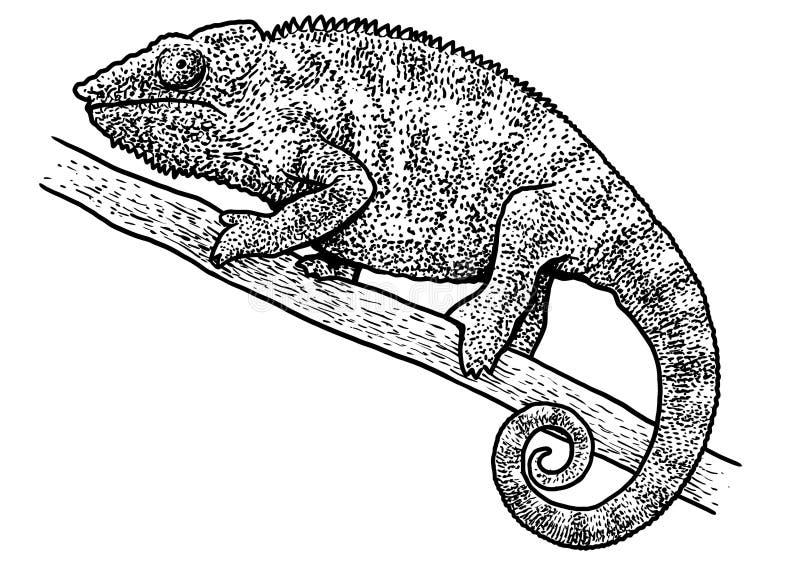 变色蜥蜴例证,图画,板刻,墨水,线艺术,传染媒介 向量例证