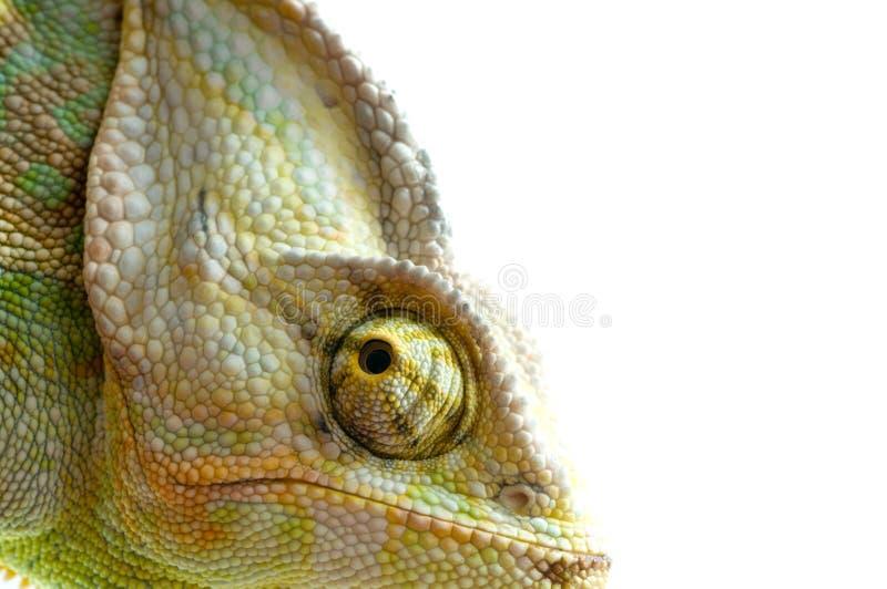 变色蜥蜴花 免版税库存照片