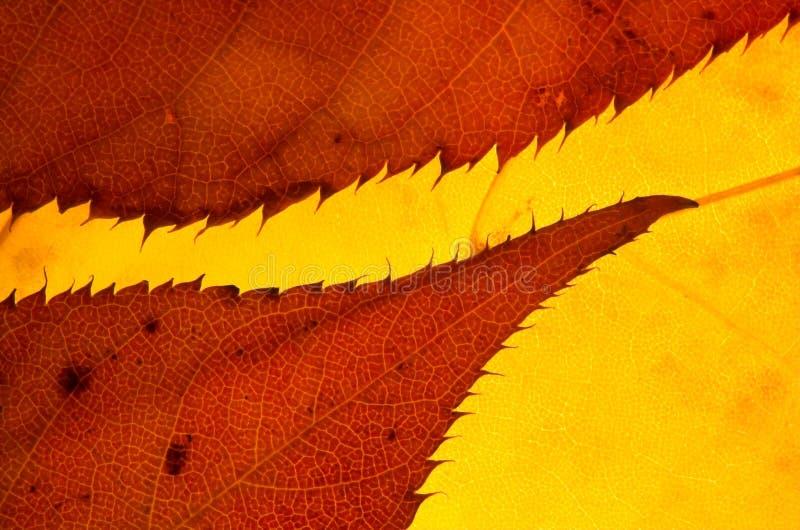 变褐叶子 图库摄影