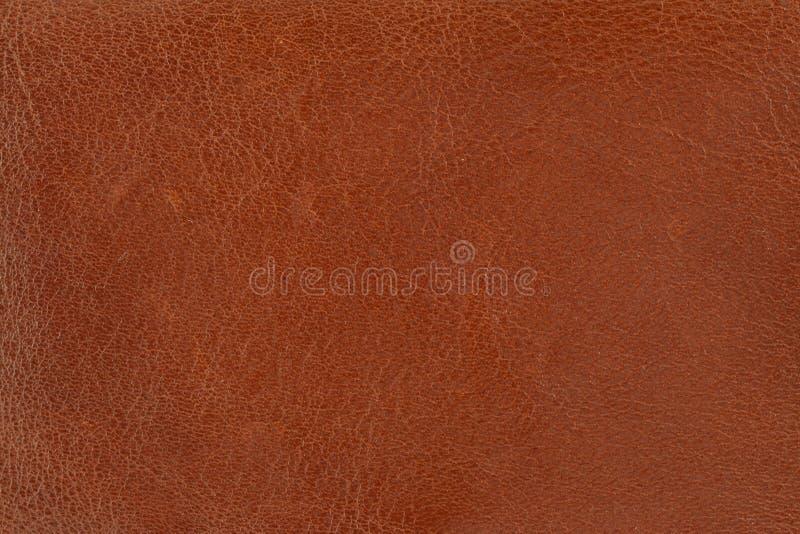 变褐皮革 免版税库存图片