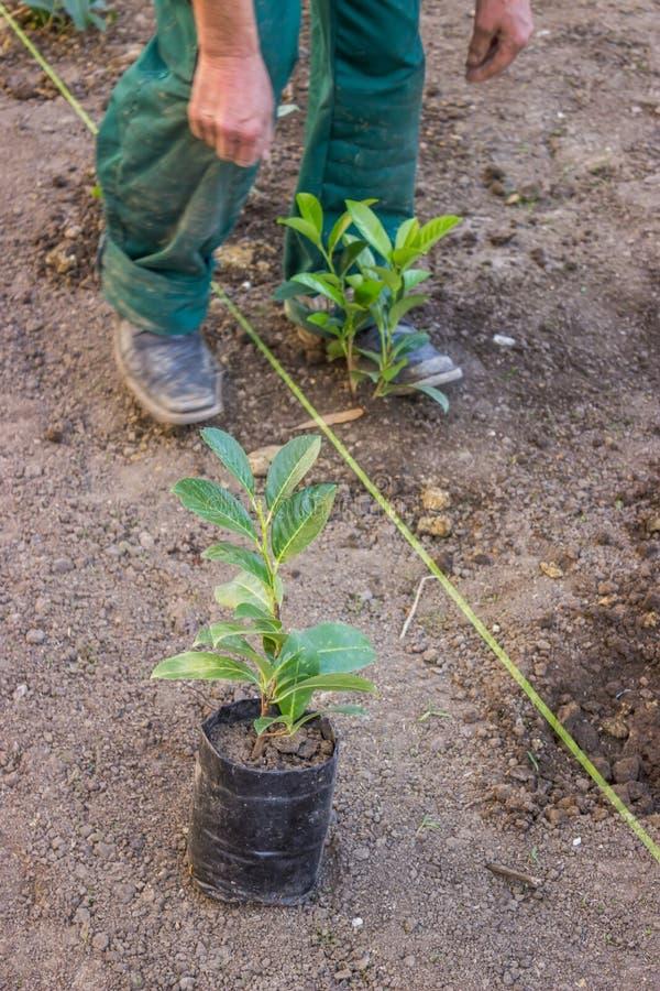 变紧密在植物附近的土壤 库存照片