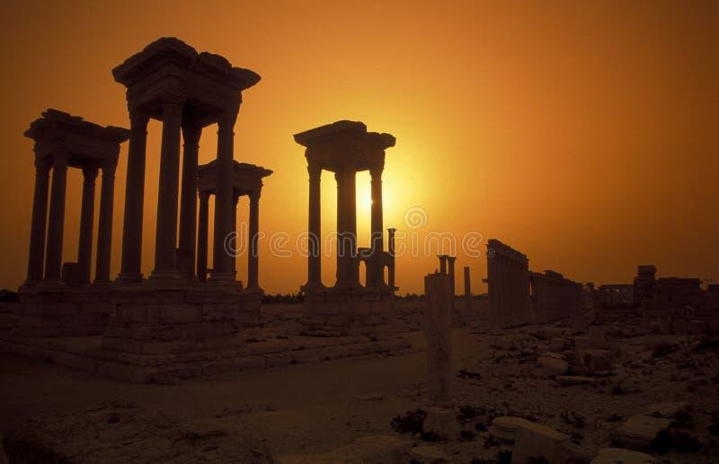 叙利亚扇叶树头榈罗马废墟 图库摄影