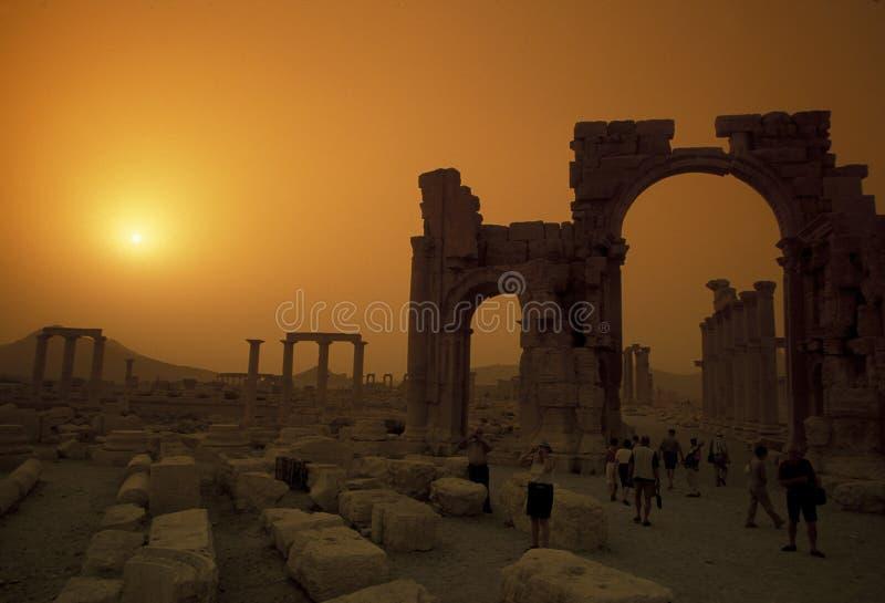 叙利亚扇叶树头榈罗马废墟 免版税库存图片