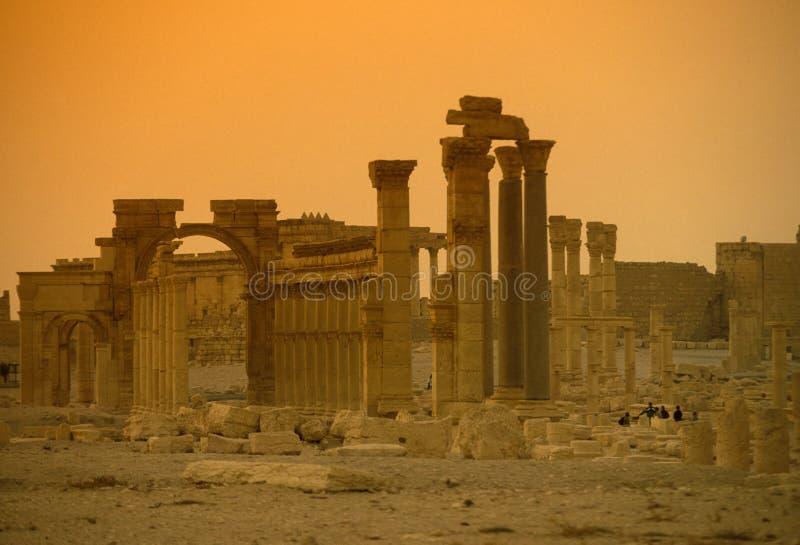 叙利亚扇叶树头榈罗马废墟 库存图片