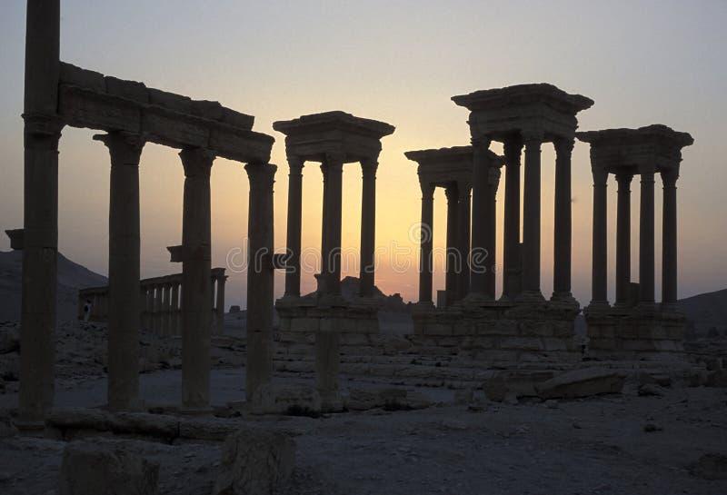 叙利亚扇叶树头榈罗马废墟 库存照片