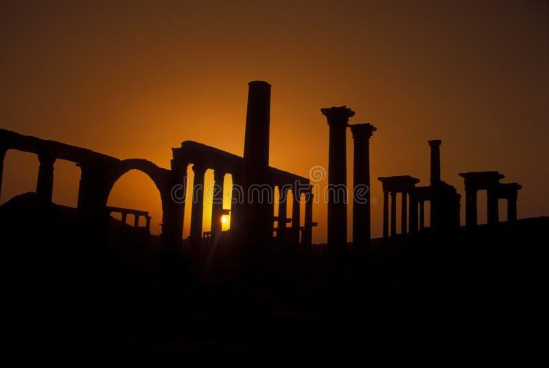 叙利亚扇叶树头榈罗马废墟 免版税库存照片