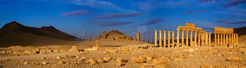 叙利亚 扇叶树头榈 免版税库存照片