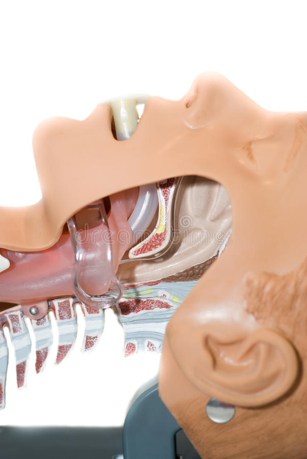 口咽的管用于打开空中航线 库存照片