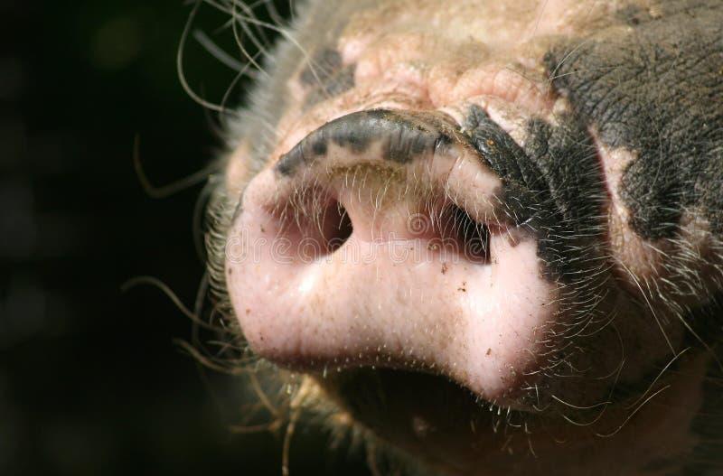 口鼻部 库存图片