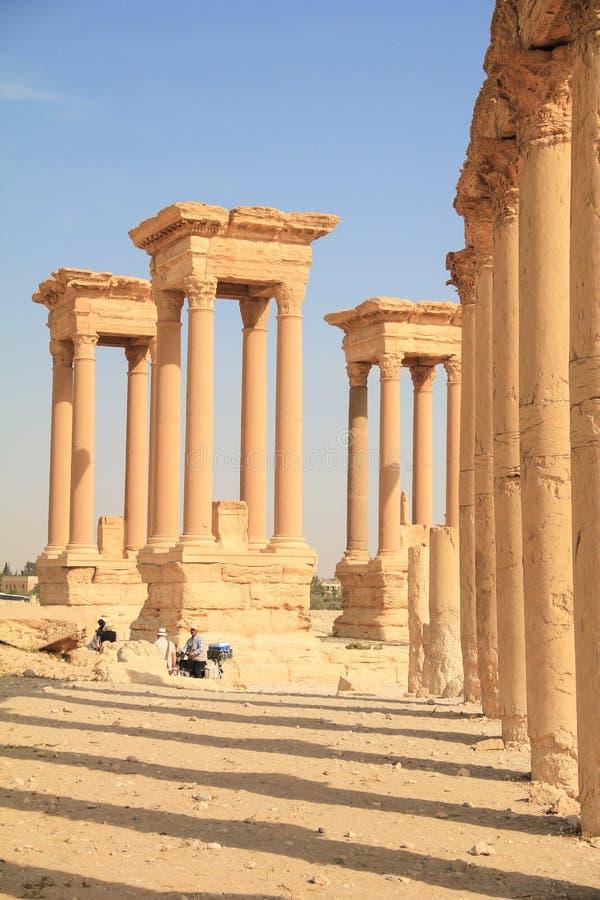古城扇叶树头榈,叙利亚的废墟 库存照片