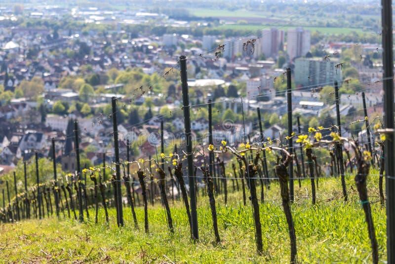 古城bensheim在有呜咽声葡萄园的黑森德国 库存照片
