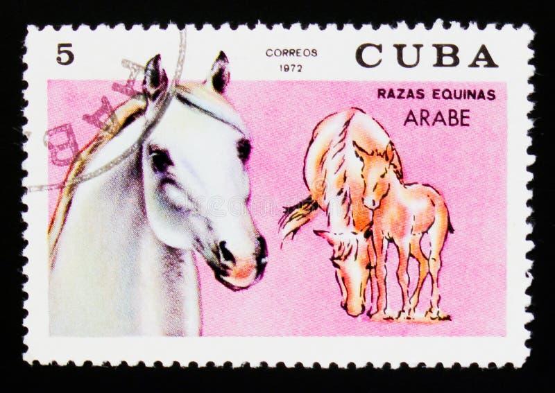 古巴邮票显示阿拉伯马马属ferus caballus,马品种serie,大约1972年 图库摄影