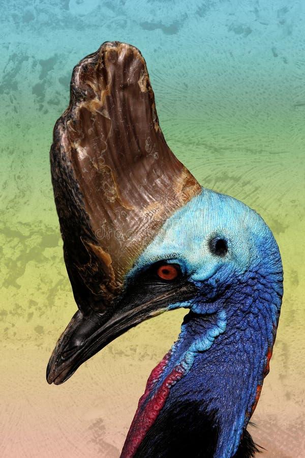古怪鸟的食火鸡 库存照片