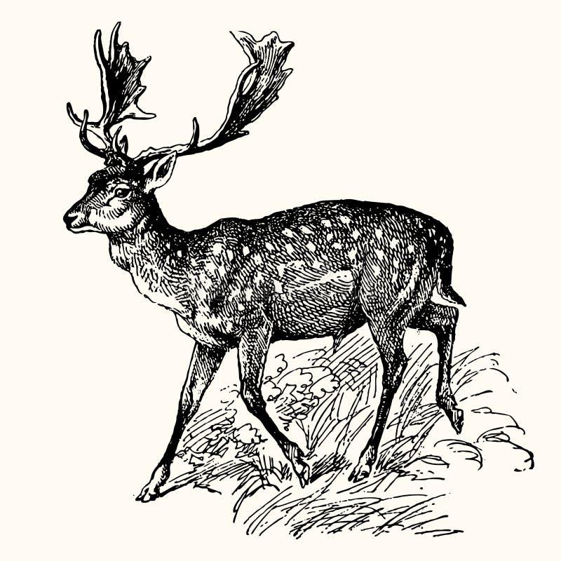 古老动物 向量例证