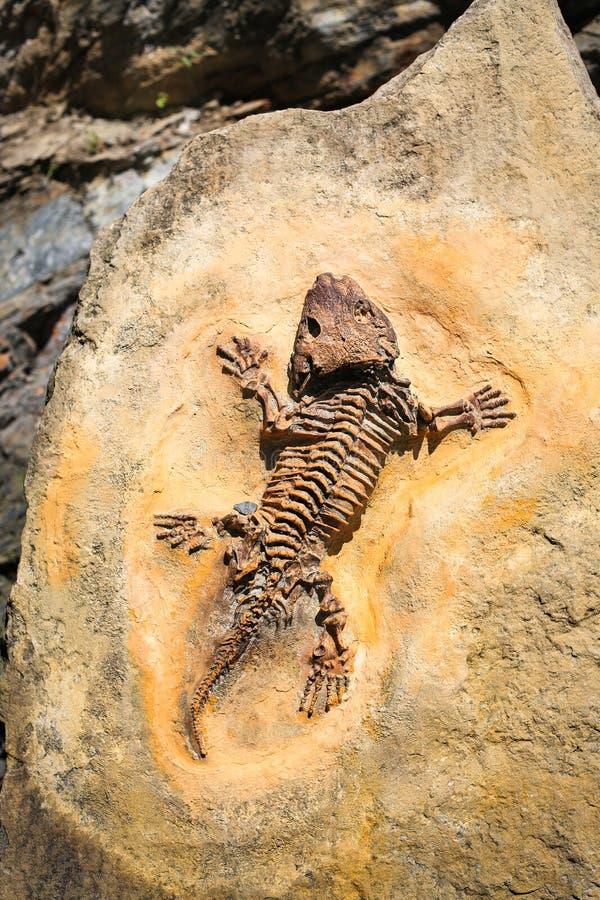 古老化石版本记录 在表面地面石头的爬行动物骨骼 考古学和古生物学概念 史前绝种动物 库存照片