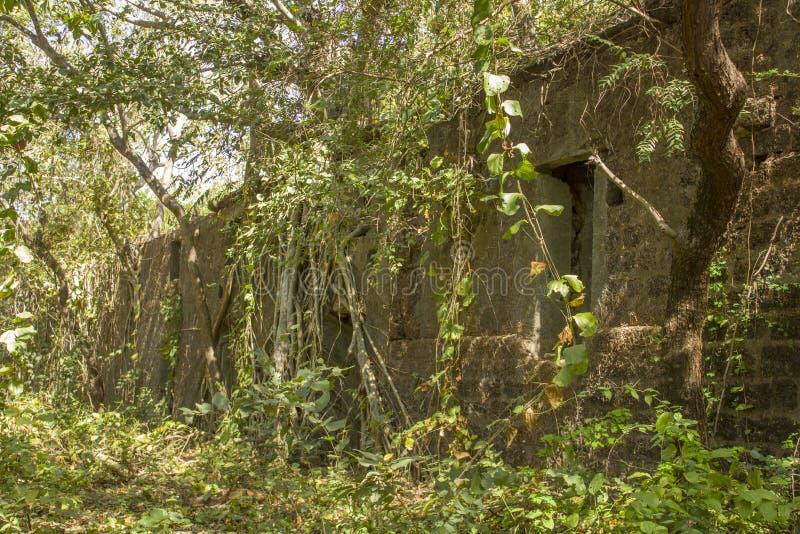 古老在鲜绿色的密林放弃了被破坏的堡垒长满与印度榕树 免版税库存照片