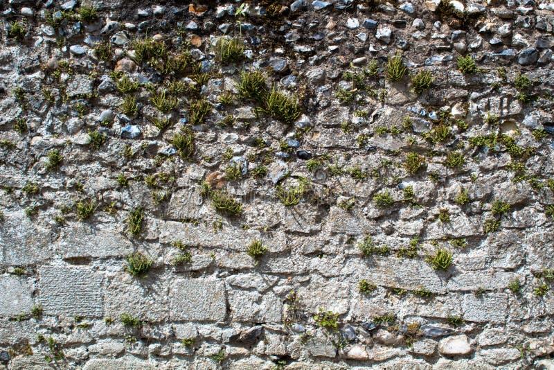 古老墙壁由另外种类与发芽的植物的石头制成 图库摄影