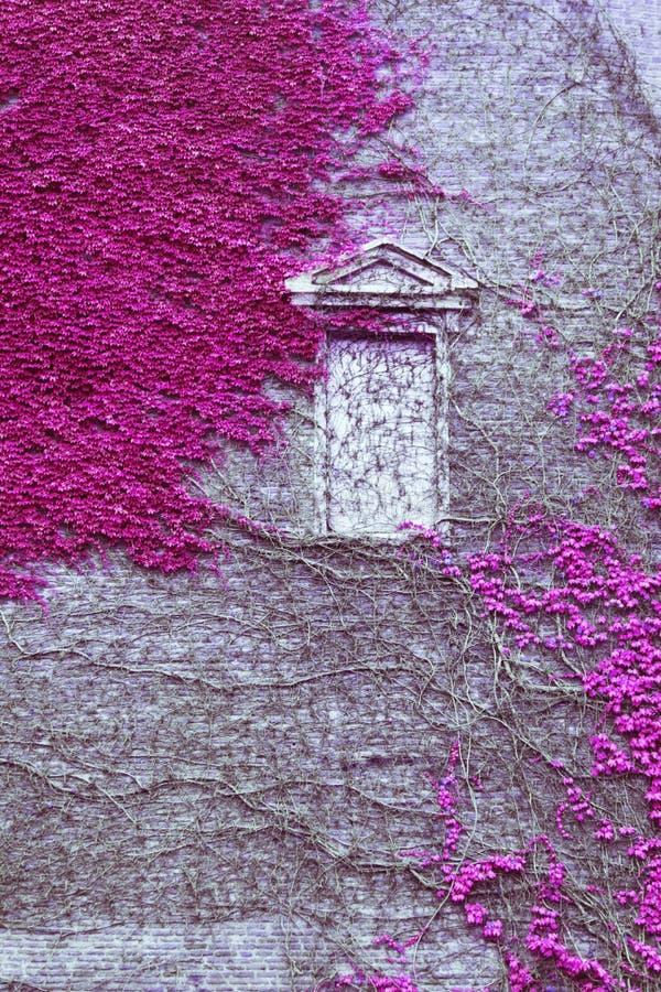 古老大厦的门面用常春藤盖 免版税库存照片