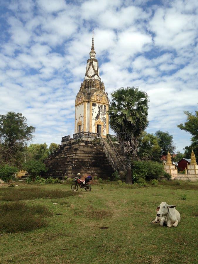 古老柬埔寨寺庙 在大厦旁边的母牛,偏僻的摩托车,没有人民 被放弃的地方,乡区 免版税库存照片