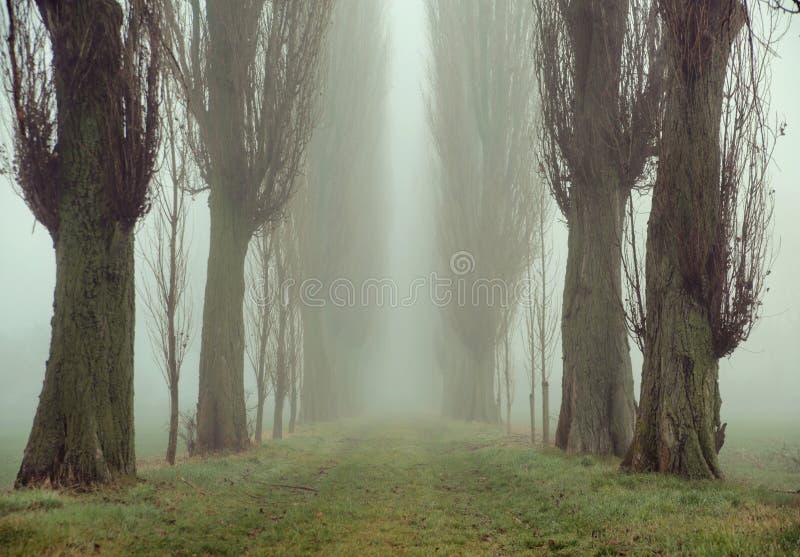 古老树的惊人的图片 图库摄影