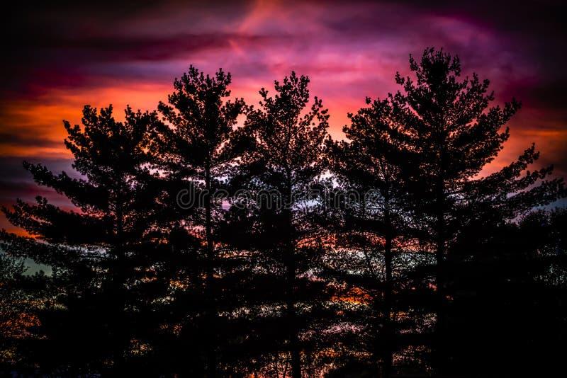 古老森林的灵魂 库存照片