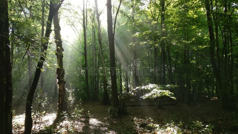 古老森林 免版税库存图片