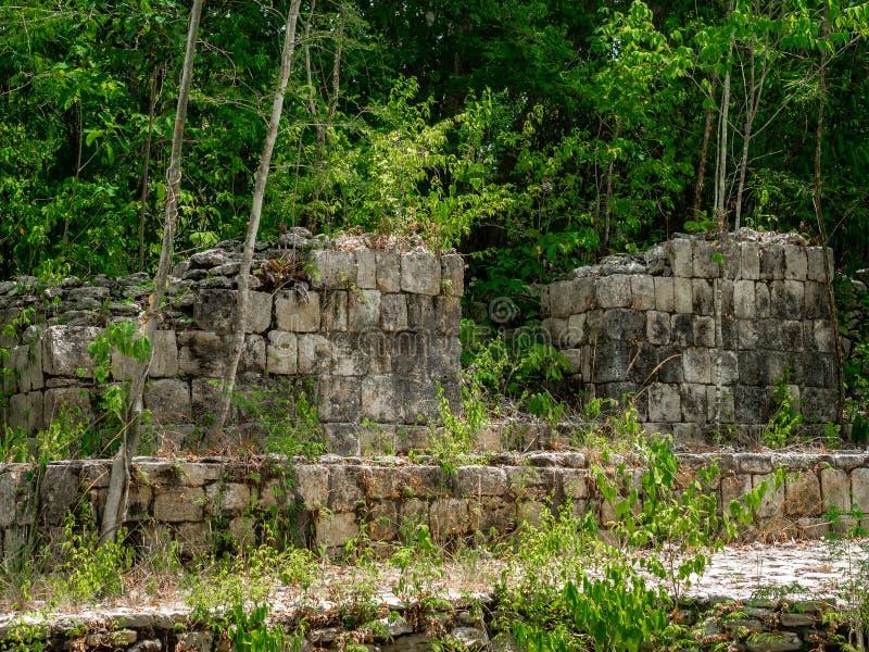古老玛雅废墟长满与植物在墨西哥密林 免版税库存图片