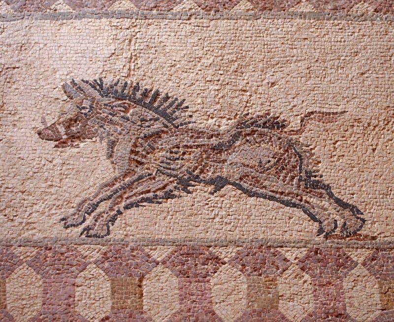 古老罗马地板马赛克的细节与一头失去控制的公猪的图象的从叫作房子的考古学废墟的  免版税图库摄影