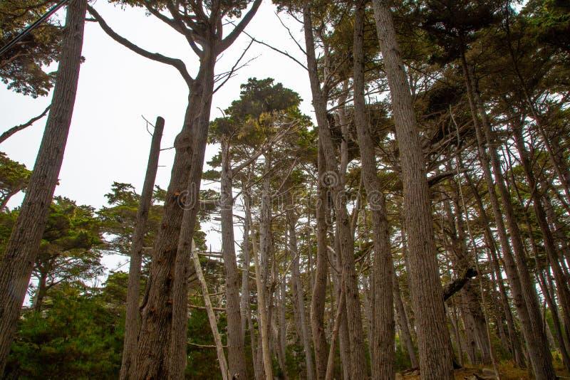 古老赛普里斯树丛 库存图片