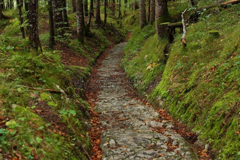 古老路通过森林 库存图片