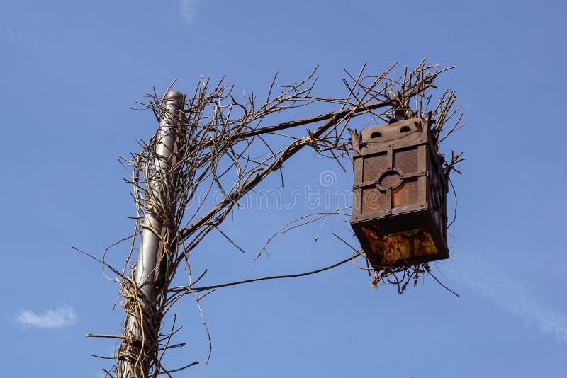 古色古香的冷淡的路灯柱和美好的积雪的分支反对天蓝色的天空 免版税库存照片